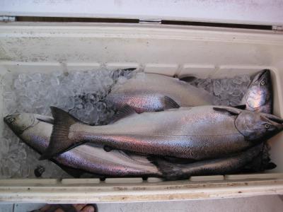 lake michigan charter fishing for salmon in wisconsin